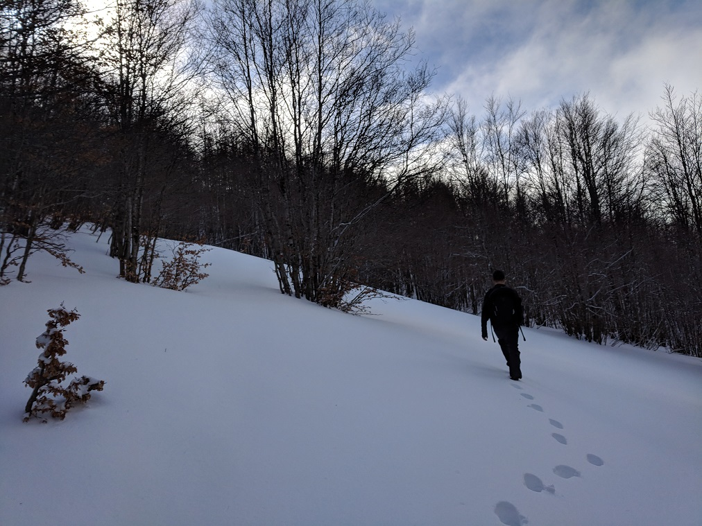 Walk through the woods as we climbed from the base of the mountain.